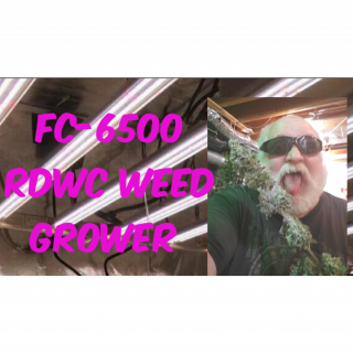 grow With Mr Foxx & MarsHydro SP-250 / FC-6500  led lightning