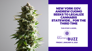 New York Gov. Seeks to Legalize Cannabis Statewide… For the Third Time | TRICHOMES Morning Buzz