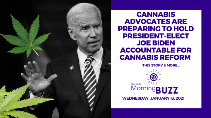 Advocates are Preparing to Hold Joe Biden Accountable for Cannabis Reform  - TRICHOMES Morning Buzz
