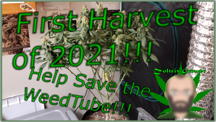 First Harvest of the Year | Announcement | Help Save the WeedTube