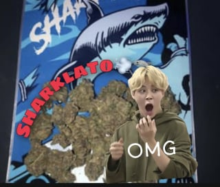 SMOKE SESH STRAIN OF THE DAY: SHARKLATO