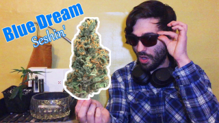 Red Eyed Widow: Blue Dream Strain Review (Seshin')