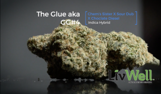 The Glue Cannabis Strain Review