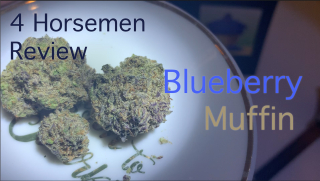 NJ Medical Cannabis Strain Review: Blueberry Muffin (Harmony Dispensary, Secaucus NJ)