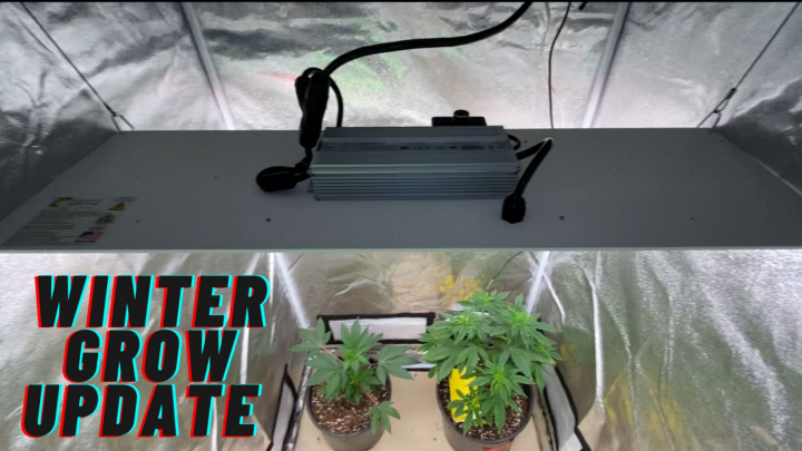 Growing Cannabis in winter, New Light and More!