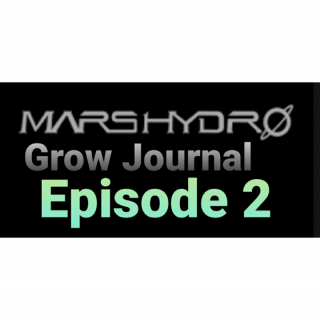 Grow Your own In RDWC under SP-3000 mars Hydro Grow Journal. #SP6500