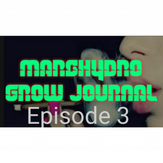 MarsHydro Grow Journal #SP6500  Episode 3 under SP-3000 & FC-6500
