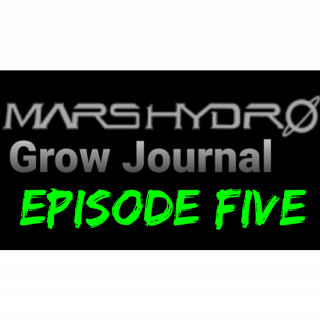 Mars Hydro Grow Journal  #SP250 #SP3000 #FC6500   Next in germination. #MARSHYDROSP6500  Episode 5