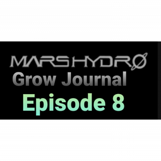 Mars Hydro Grow Journal  #SP250 #SP3000 #FC6500 RDWC GROW ROOM #MARSHYDROSP6500  Episode 8