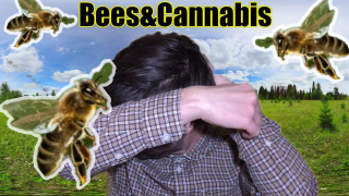 Breaking: Do Bees Eat Kief? Bees&Cannabis