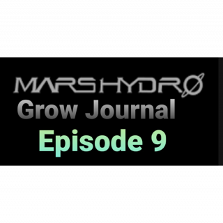 Mars Hydro Grow Journal  #SP250 #SP3000 #FC6500 RDWC GROW ROOM #MARSHYDROSP6500  Episode 9