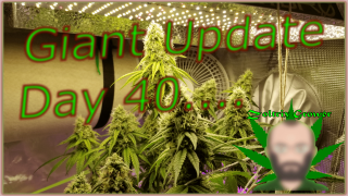 Day 40 for the Giant! | Big Announcement! | Mars Hydro Grow Journal SP3000, TS1000, TS600