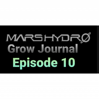 Mars Hydro Grow Journal  #SP250 #SP3000 #FC6500 RDWC GROW ROOM #MARSHYDROSP6500  Episode 10