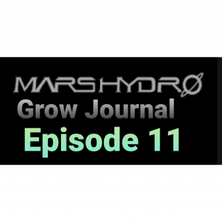 Mars Hydro Grow Journal  #SP250 #SP3000 #FC6500 RDWC GROW ROOM #MARSHYDROSP6500  Episode 11