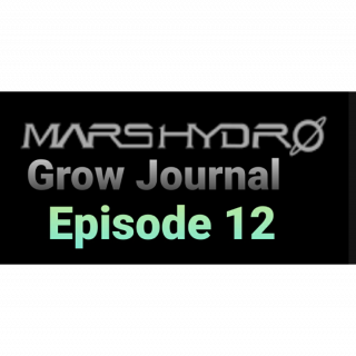 Mars Hydro Grow Journal  #SP250 #SP3000 #FC6500 RDWC GROW ROOM #MARSHYDROSP6500  Episode 12 WeedPorn
