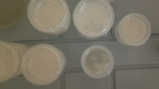 How to Avoid Condensation on Agar Cups