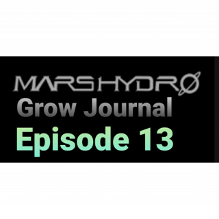 MarsHydro Grow Journal  #SP3000 #FC6500 RDWC GROW ROOM #MARSHYDROSP6500  Episode 13 Look How Big Bud