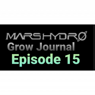 MarsHydro Grow Journal  #SP3000 #FC6500 RDWC GROW ROOM week 6 #MARSHYDROSP6500  Episode 15 checking