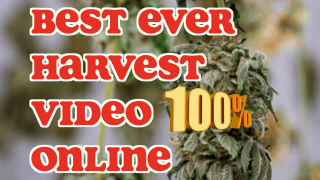 The Best Ever Harvest Video Online