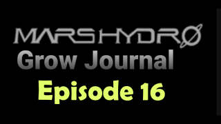 MarsHydro Grow Journal  #SP3000 #FC6500 RDWC GROW ROOM week 6 #MARSHYDROSP6500  Episode 16