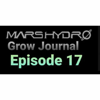 MarsHydro Grow Journal  #SP3000 #FC6500 RDWC GROW led light TS-600 #MARSHYDROSP6500  Episode 17
