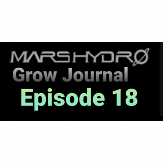 MarsHydro Grow Journal  #SP3000 #FC6500 RDWC GROW led light FC-6500 #MARSHYDROSP6500  Episode 18
