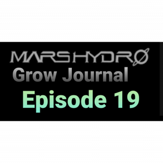 MarsHydro Grow Journal  #SP3000 #FC6500 RDWC GROW led light SP-250 #MARSHYDROSP6500  Episode 19