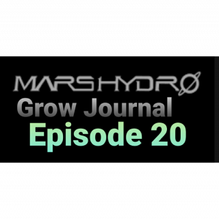 MarsHydro Grow Journal  #SP3000 #FC6500 RDWC GROW led light SP-3000 #MARSHYDROSP6500  Episode 20