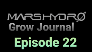 MarsHydro Grow Journal  #SP-6500 #FC-6500 RDWC GROW led light Week Six  #MARSHYDROSP6500  Episode 22