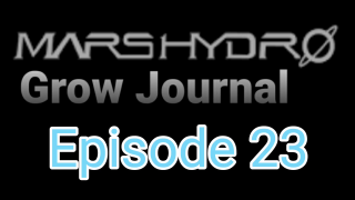 MarsHydro Grow Journal   #FC6500 RDWC GROW UNDER SP-250 & SP-3000 Episode 17 #MARSHYDROSP6500