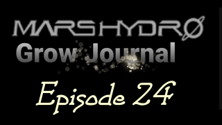 MarsHydro Grow Journal  #SP-250 #FC6500 RDWC GROW IN THE VEG TENT #MARSHYDROSP6500  Episode 24