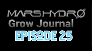 MarsHydro Grow Journal  #FC6500 Cloning IN DWC  #MARSHYDROSP6500  Episode 25