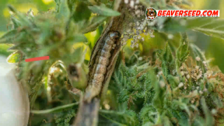 Monitor pests and mold growth Useful Tips for Beginners Beaver Seeds