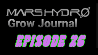 MarsHydro Grow Journal   #FC6500  Final Flash under TS-600 LED  #MARSHYDROSP6500  Episode 26