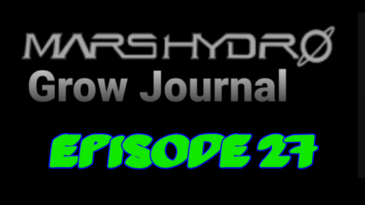 MarsHydro Grow Journal  #FC6500  Deleafing Blue Dream #MARSHYDROSP6500  Episode 27
