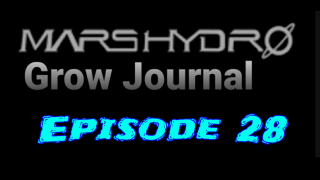MarsHydro Grow Journal  #SP-250 #FC6500 RDWC Veg Tent & Seedlings  #MARSHYDROSP6500  Episode 28