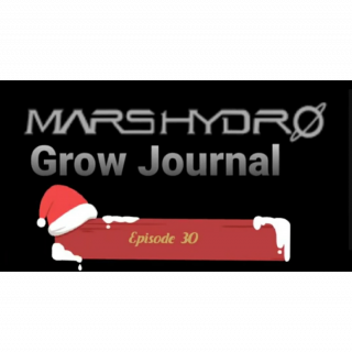 MarsHydro Grow Journal   #FC6500 RDWC GROW UNDER SP-250 & SP-3000 Episode 30 #MARSHYDROSP6500