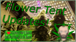 Mars Hydro Grow Journal SP3000 and TS1000 | Perpetual Flower Tent Updates | Sunset Sherbet Week 7