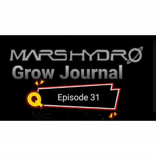 MarsHydro Grow Journal  #SP-250 #FC6500 RDWC Veg Tent & Seedlings  #MARSHYDROSP6500  Episode 31