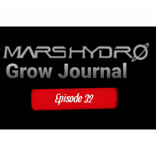 MarsHydro Grow Journal  #FC6500  RDWC / Blue Dream week 6 #MARSHYDROSP6500  Episode 32