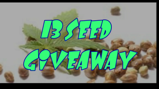 MarsHydro Grow Journal  13 SEED GIVEAWAY #FC6500 #MARSHYDROSP6500