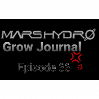 MarsHydro Grow Journal  #SP-250 #FC6500 RDWC Veg Tent & Seedlings  #MARSHYDROSP6500  Episode 33