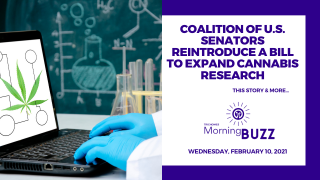 Coalition of U.S. Senators Reintroduce a Bill to Expand Cannabis Research | TRICHOMES Morning Buzz