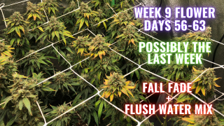 WEEK 9 FLOWER PHOTO PERIODS IN COCO COIR: GROWING WEED IN A CLOSET MADE EASY