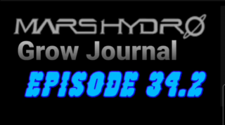 MarsHydro Grow Journal  #SP-250 #FC6500 RDWC Veg Tent & Seedlings  #MARSHYDROSP6500  Episode 34.2