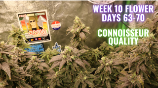 WEEK 10 FLOWER FOR PHOTO PERIODS IN COCO COIR: GROWING WEED IN A CLOSET MADE EASY: