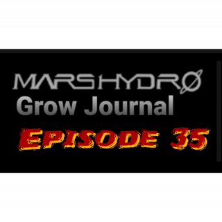 MarsHydro Grow Journal  #SP-250 #FC6500 RDWC Flower & Veg & Seedlings  #MARSHYDROSP6500  Episode 35