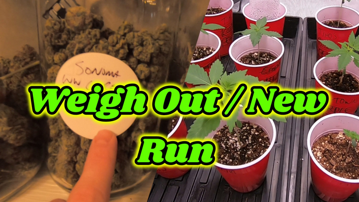 Weigh Out / New Run / Mars Hydro SP3000