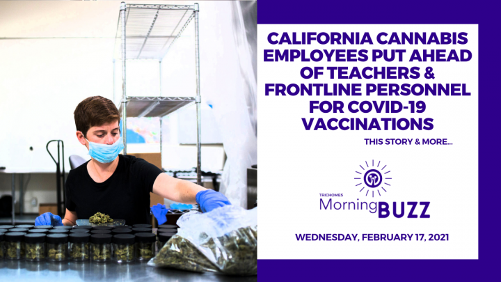 CA Cannabis Employees Put Ahead of Teachers & Frontline Personnel for COVID-19 Vaccinations