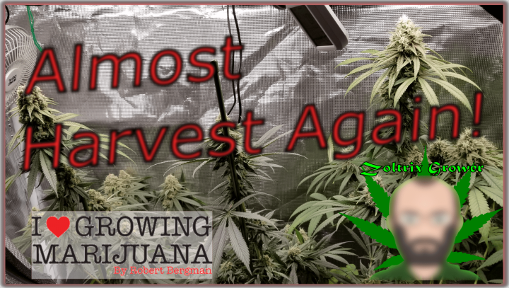 Almost Harvest Time, Again! | Update on the Giveaway | Mars Hydro Grow Journal - Multi Light Setup